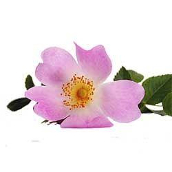 """Az. Agr. """"Pian d'le Rose"""""""