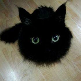 Cat Cyr
