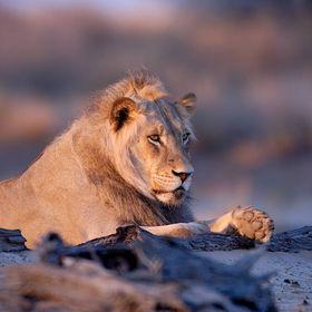 Jewel of Africa Safaris