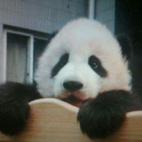 c3c4105183697 Panda Sanchez (pandarthur) on Pinterest