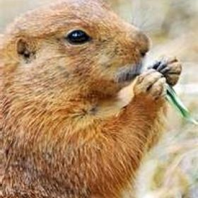 Les Marottes De La Marmotte