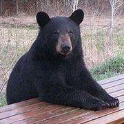 Tatalan (aka The bear)