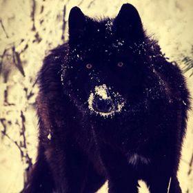 WolfinBlack Black