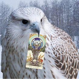Falcon C. Tarot