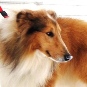 Almost Home Dog Rescue of Ohio