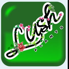 Lush Plants    Online Nursery