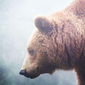 Seek Bear