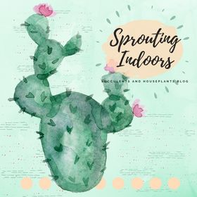 Sprouting Indoors | Succulent and Houseplants Blog