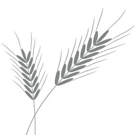 Wheat Canada