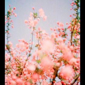 Stelagermond