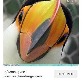 Iris Lenderink