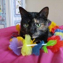 Carissa Cat