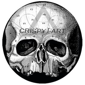 Joseph Crisp
