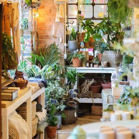 From Victoria Shop - Unique House Plants and Homewares