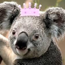 Queen Koala