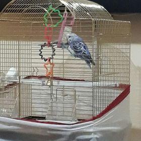 Çiğdem Kucukalkan