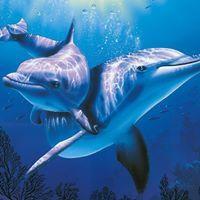 Exilu Delfínci