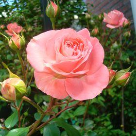 Roos de Jong