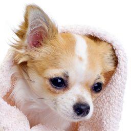 Small Dog Heaven