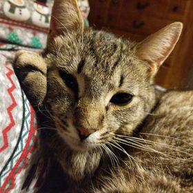 Teen celebrity mačička