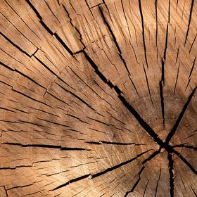 Der Wohnpionier - Inneneinrichung & Wohnen mit Holz
