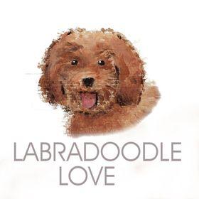 Labradoodle Love