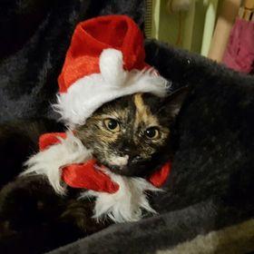 Festive rouge Licorne Renne Moelleux Horn Noël Fancy Dress Bandeau