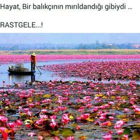 Lale Gül