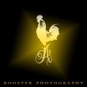 ROOSTER PHOTOGRAPHY