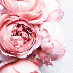 Sakurachan Blossom