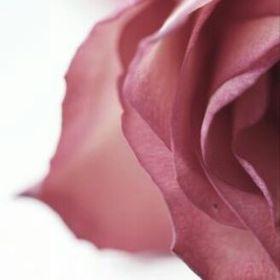 Rose of Damas