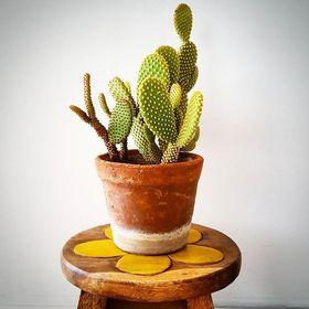 kaktuscu