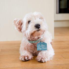 Set 2 Party Trays Dog Dachshund Wiener Pug Corgi Lab Gift Home Decor Melamine