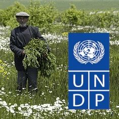 UNDP in Europe and Central Asia .