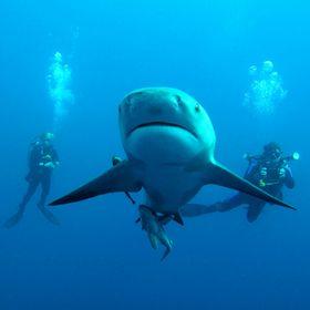 Dive in Adventures