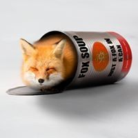 0l- Fox   -l0