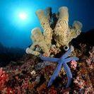 Azzurra Marea
