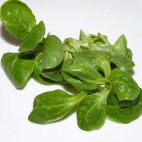 Salatrezepte.at