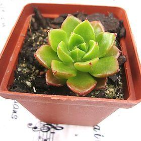 Lotza Succulents