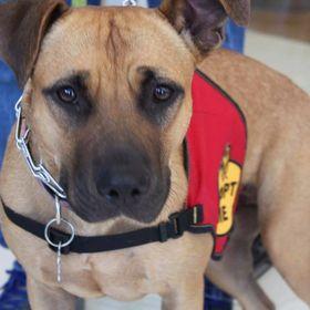 Foster Pet Outreach