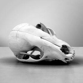 Rat Skull