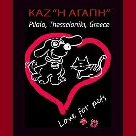 Strays Of_Thessaloniki