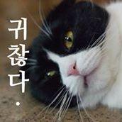 Yona Yoon
