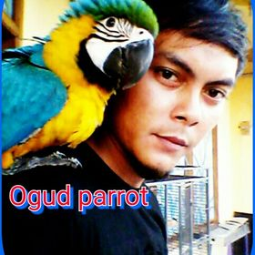 Ogud Parrot