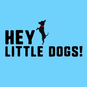 Hey Little Dogs | Dog Shirts, Clothes, Coats & Outfits | Dog Toys