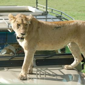 East African Safari and Touring Company