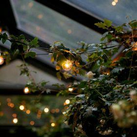 light daisy eyes and milk skin lilolights