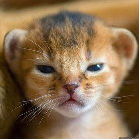 gato monsivais