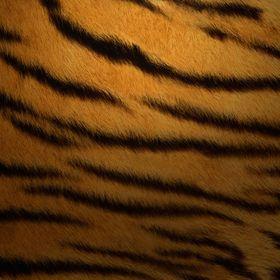 Tiger Creative