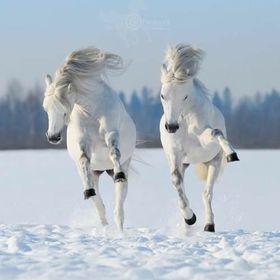 Strange Horse